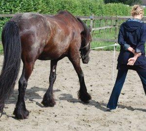 Leiderschapscoaching ja, maar met een paard?